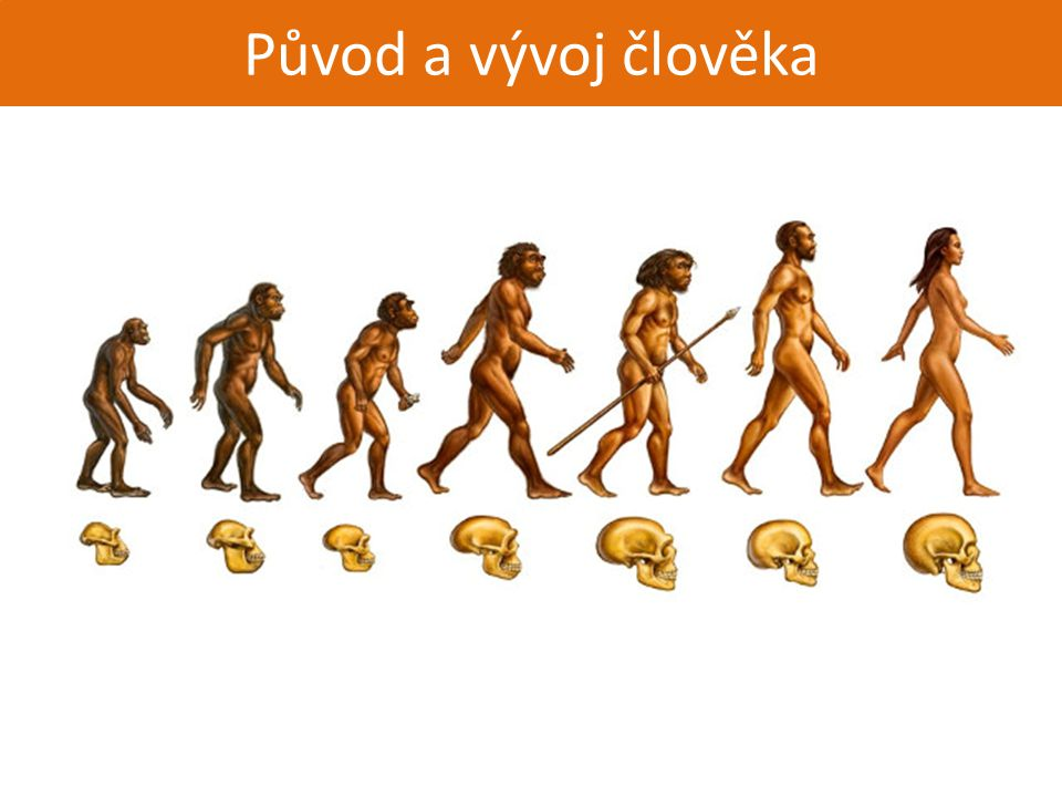 Původ a vývoj člověka