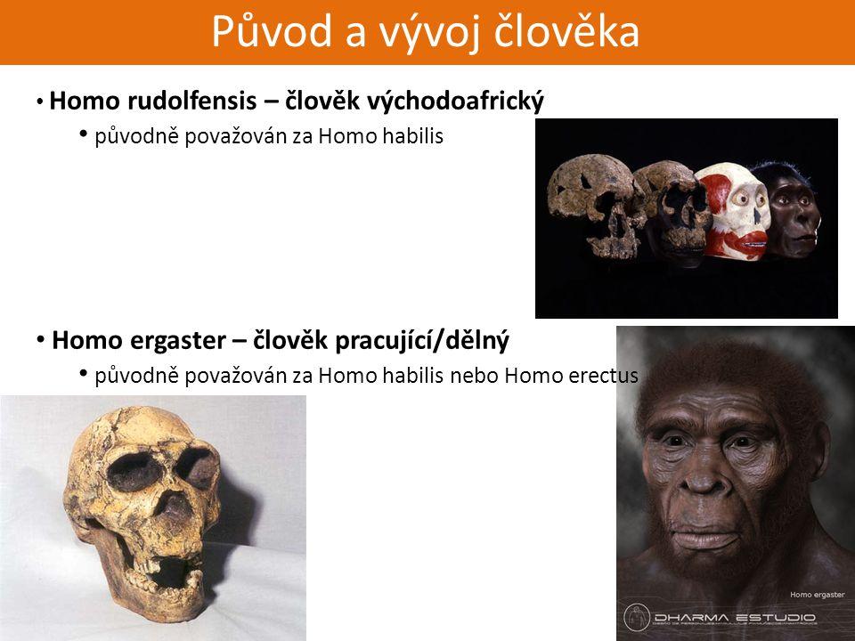 Živorodí - placentálové Původ a vývoj člověka Homo rudolfensis – člověk východoafrický původně považován za Homo habilis Homo ergaster – člověk pracuj