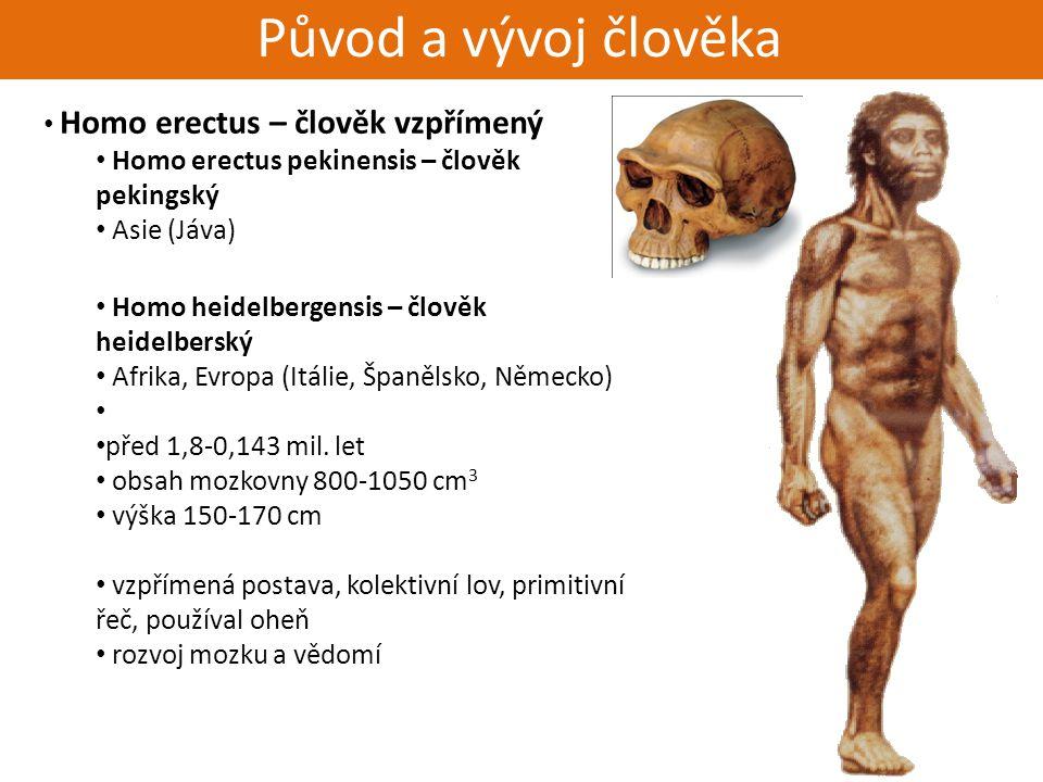Živorodí - placentálové Původ a vývoj člověka Homo erectus – člověk vzpřímený Homo erectus pekinensis – člověk pekingský Asie (Jáva) Homo heidelbergen