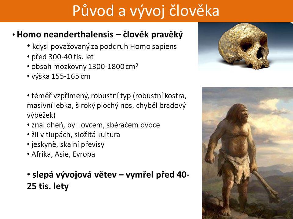 Živorodí - placentálové Původ a vývoj člověka Homo neanderthalensis – člověk pravěký kdysi považovaný za poddruh Homo sapiens před 300-40 tis. let obs