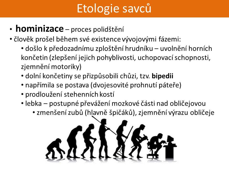 Živorodí - placentálové Etologie savců hominizace – proces polidštění člověk prošel během své existence vývojovými fázemi: došlo k předozadnímu zplošt