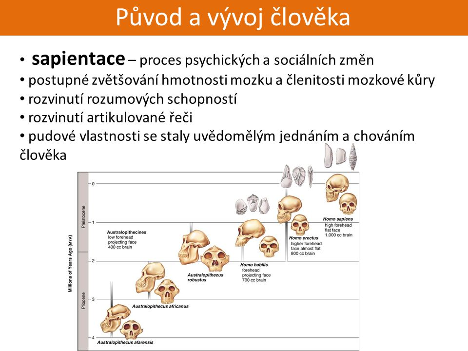 Živorodí - placentálové Původ a vývoj člověka sapientace – proces psychických a sociálních změn postupné zvětšování hmotnosti mozku a členitosti mozko