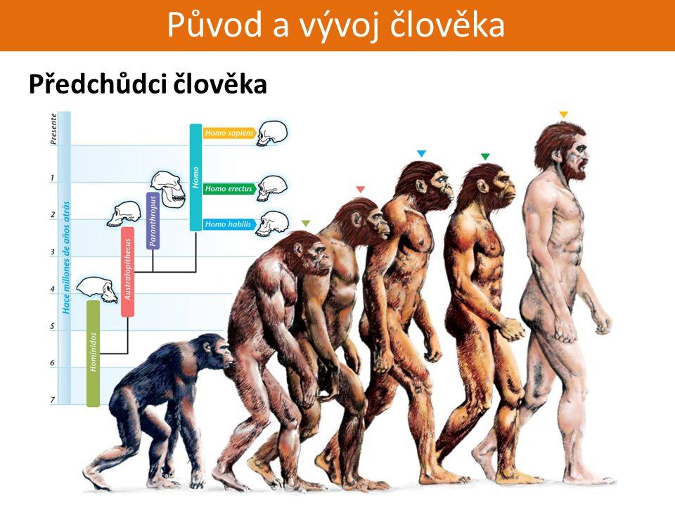 Živorodí - placentálové Původ a vývoj člověka Předchůdci člověka