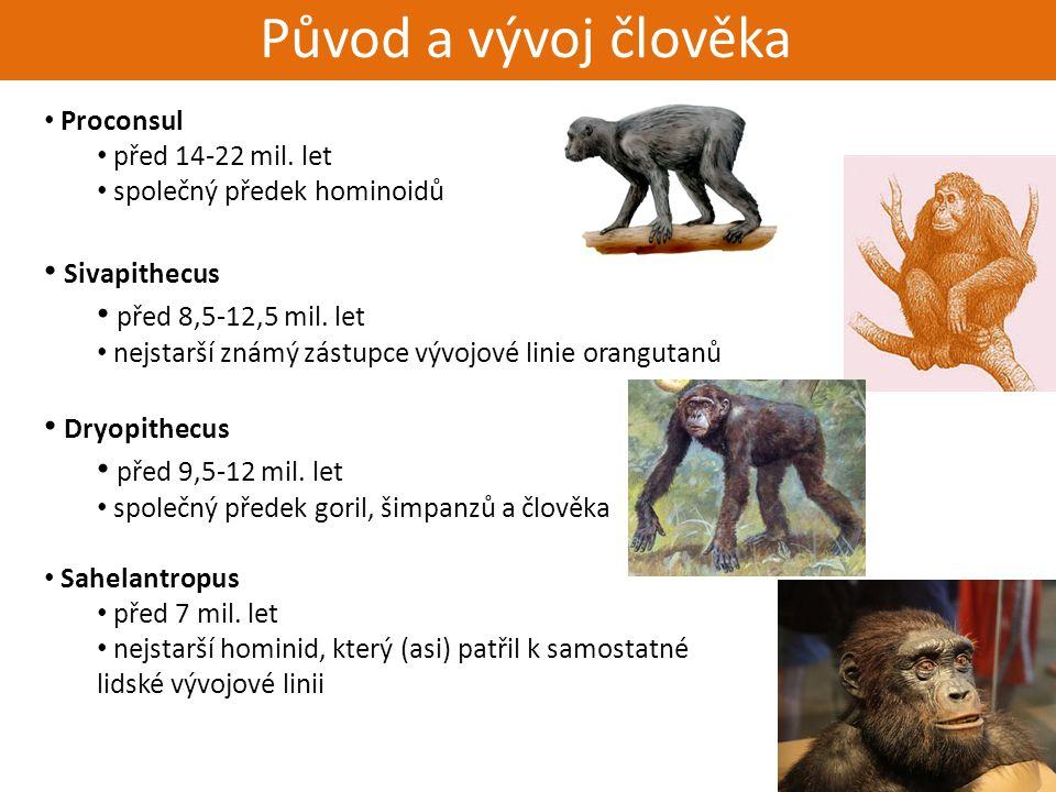 Živorodí - placentálové Původ a vývoj člověka Proconsul před 14-22 mil. let společný předek hominoidů Sivapithecus před 8,5-12,5 mil. let nejstarší zn