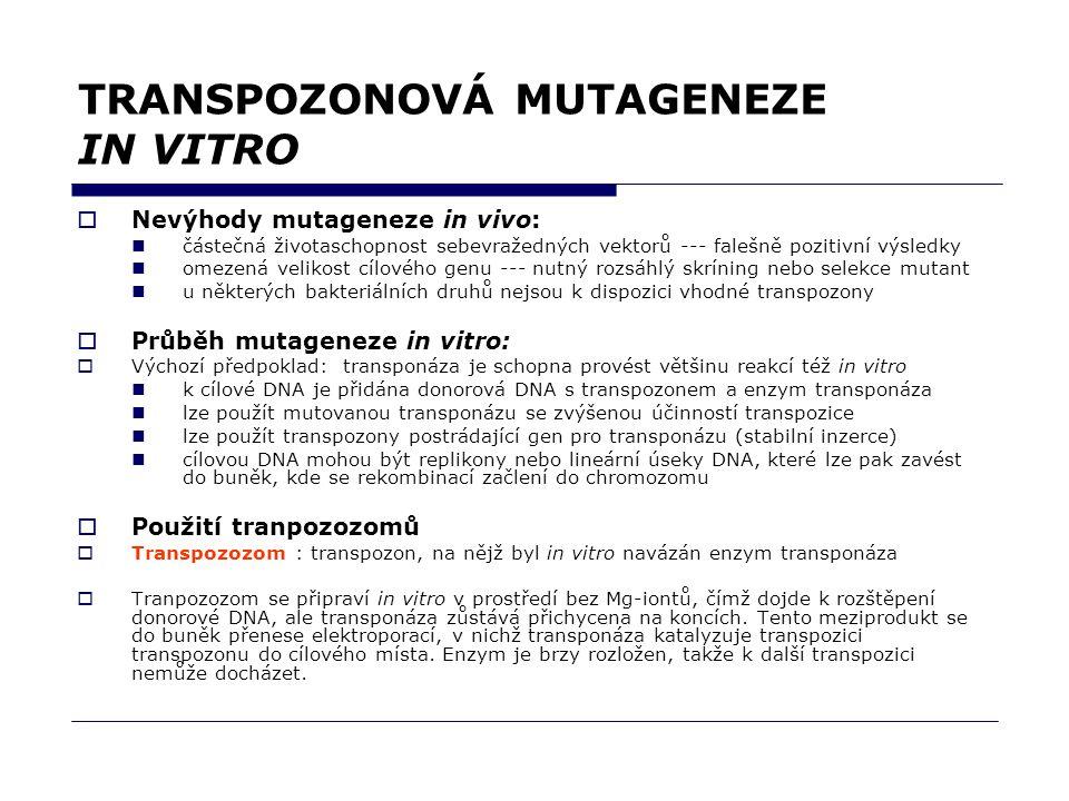TRANSPOZONOVÁ MUTAGENEZE IN VITRO  Nevýhody mutageneze in vivo: částečná životaschopnost sebevražedných vektorů --- falešně pozitivní výsledky omezená velikost cílového genu --- nutný rozsáhlý skríning nebo selekce mutant u některých bakteriálních druhů nejsou k dispozici vhodné transpozony  Průběh mutageneze in vitro:  Výchozí předpoklad: transponáza je schopna provést většinu reakcí též in vitro k cílové DNA je přidána donorová DNA s transpozonem a enzym transponáza lze použít mutovanou transponázu se zvýšenou účinností transpozice lze použít transpozony postrádající gen pro transponázu (stabilní inzerce) cílovou DNA mohou být replikony nebo lineární úseky DNA, které lze pak zavést do buněk, kde se rekombinací začlení do chromozomu  Použití tranpozozomů  Transpozozom : transpozon, na nějž byl in vitro navázán enzym transponáza  Tranpozozom se připraví in vitro v prostředí bez Mg-iontů, čímž dojde k rozštěpení donorové DNA, ale transponáza zůstává přichycena na koncích.