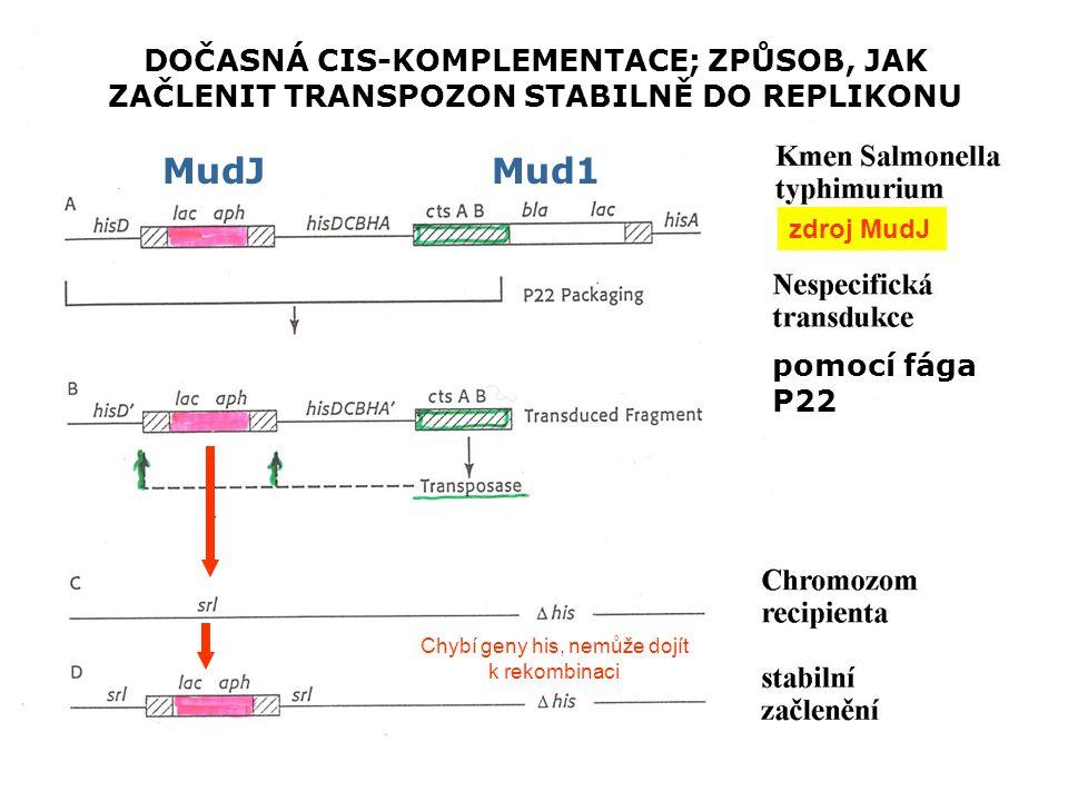 MudJMud1 DOČASNÁ CIS-KOMPLEMENTACE; ZPŮSOB, JAK ZAČLENIT TRANSPOZON STABILNĚ DO REPLIKONU pomocí fága P22 zdroj MudJ Chybí geny his, nemůže dojít k rekombinaci