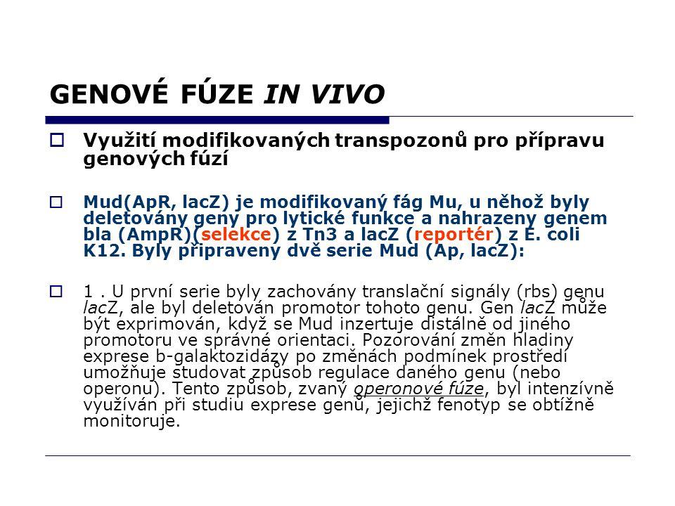 GENOVÉ FÚZE IN VIVO  Využití modifikovaných transpozonů pro přípravu genových fúzí  Mud(ApR, lacZ) je modifikovaný fág Mu, u něhož byly deletovány g
