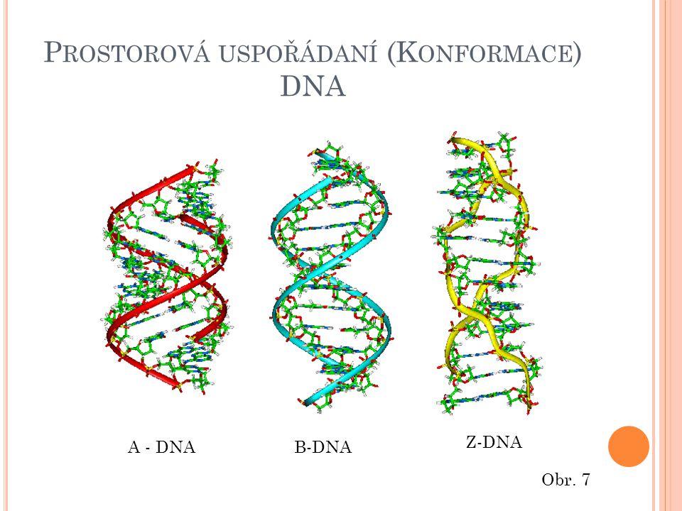 P ROSTOROVÁ USPOŘÁDANÍ (K ONFORMACE ) DNA A - DNAB-DNA Z-DNA Obr. 7