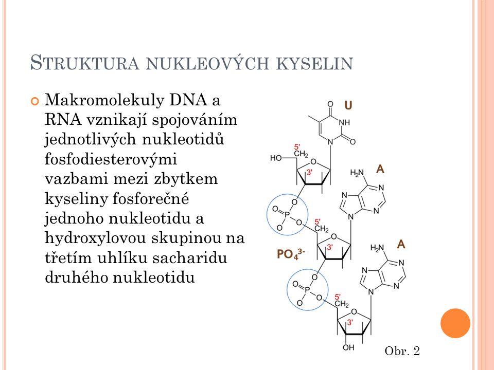 S TRUKTURA NUKLEOVÝCH KYSELIN Makromolekuly DNA a RNA vznikají spojováním jednotlivých nukleotidů fosfodiesterovými vazbami mezi zbytkem kyseliny fosforečné jednoho nukleotidu a hydroxylovou skupinou na třetím uhlíku sacharidu druhého nukleotidu Obr.