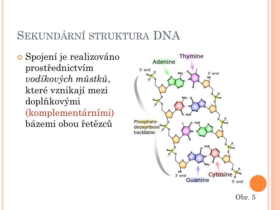 S EKUNDÁRNÍ STRUKTURA DNA Spojení je realizováno prostřednictvím vodíkových můstků, které vznikají mezi doplňkovými (komplementárními) bázemi obou řetězců Obr.