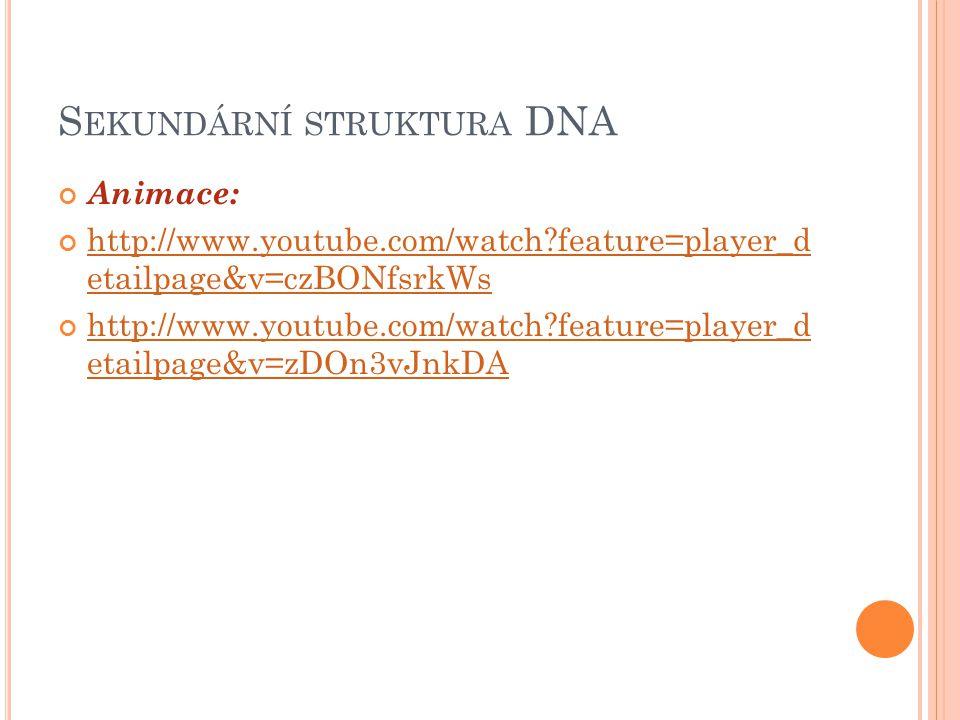 S EKUNDÁRNÍ STRUKTURA DNA Řetězce jsou - komplementární - antiparalelní Obr. 6