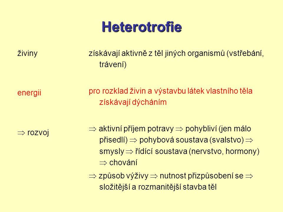 Heterotrofie živiny energii  rozvoj získávají aktivně z těl jiných organismů (vstřebání, trávení) pro rozklad živin a výstavbu látek vlastního těla z