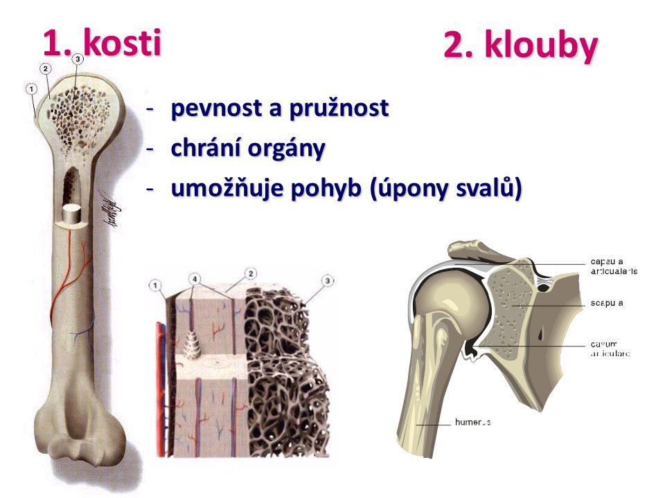 -pevnost a pružnost -chrání orgány -umožňuje pohyb (úpony svalů) 1. kosti 2. klouby