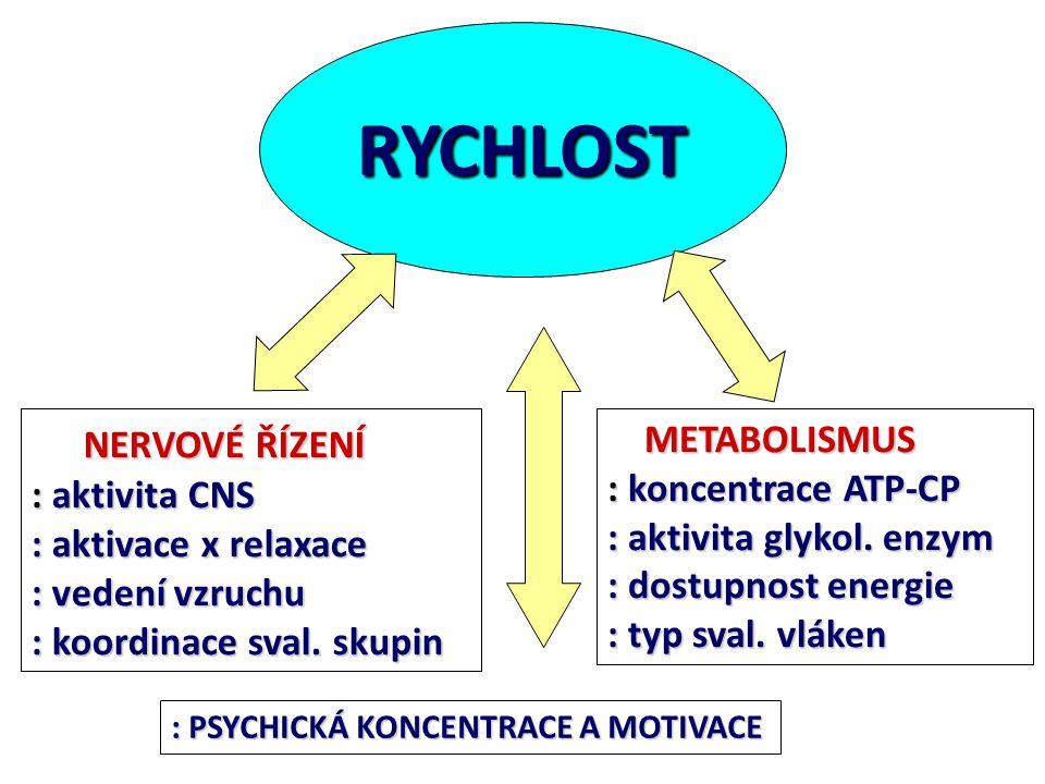 RYCHLOST NERVOVÉ ŘÍZENÍ NERVOVÉ ŘÍZENÍ : aktivita CNS : aktivace x relaxace : vedení vzruchu : koordinace sval. skupin METABOLISMUS METABOLISMUS : kon