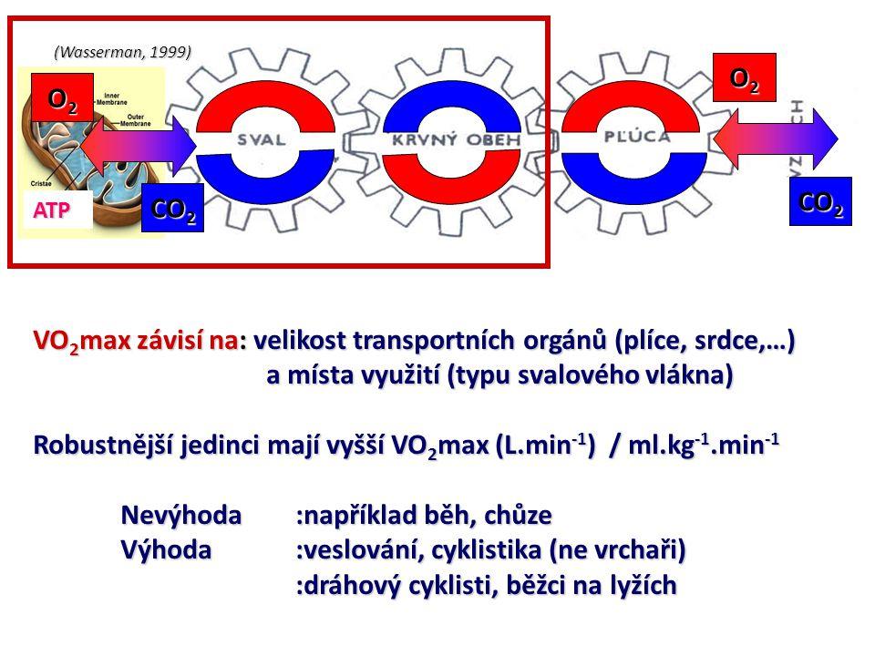 (Wasserman, 1999) ATP O2O2O2O2 O2O2O2O2 CO 2 VO 2 max závisí na: velikost transportních orgánů (plíce, srdce,…) a místa využití (typu svalového vlákna