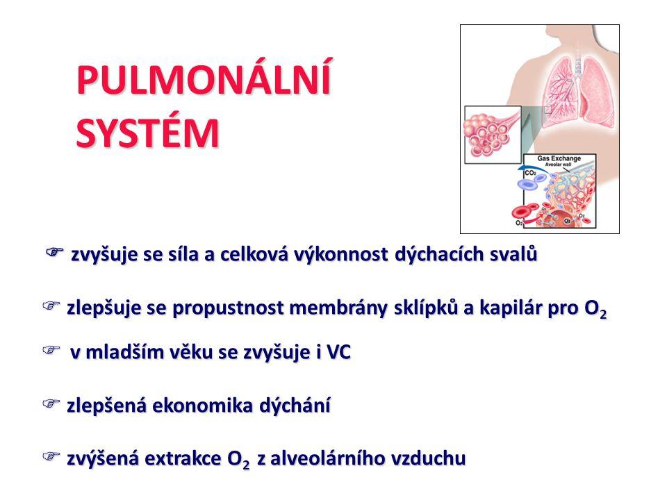 ZMĚNYSVALOVÉHOSYSTÉMU  Zvětšení a zmnožení buněčných orgánů aerobního metabolismu  Zvýšená aktivita oxidativních enzymů a koncentrace myoglobinu  Zlepšená kapilarizace a prokrvení svalových vláken  Zlepšená extrakce O 2