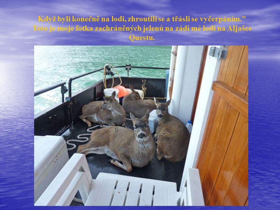 Když byli konečně na lodi, zhroutili se a třásli se vyčerpáním. Toto je moje fotka zachráněných jelenů na zádi mé lodi na Aljašce Questu.