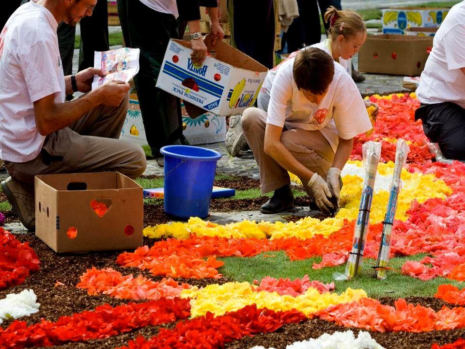 Květinový koberec na ploše Grand Place zabírá 110 m x 68m. Odhaduje se, že na metr čtvereční je použito přibližně 300 begónií. Je to velmi působivé. P