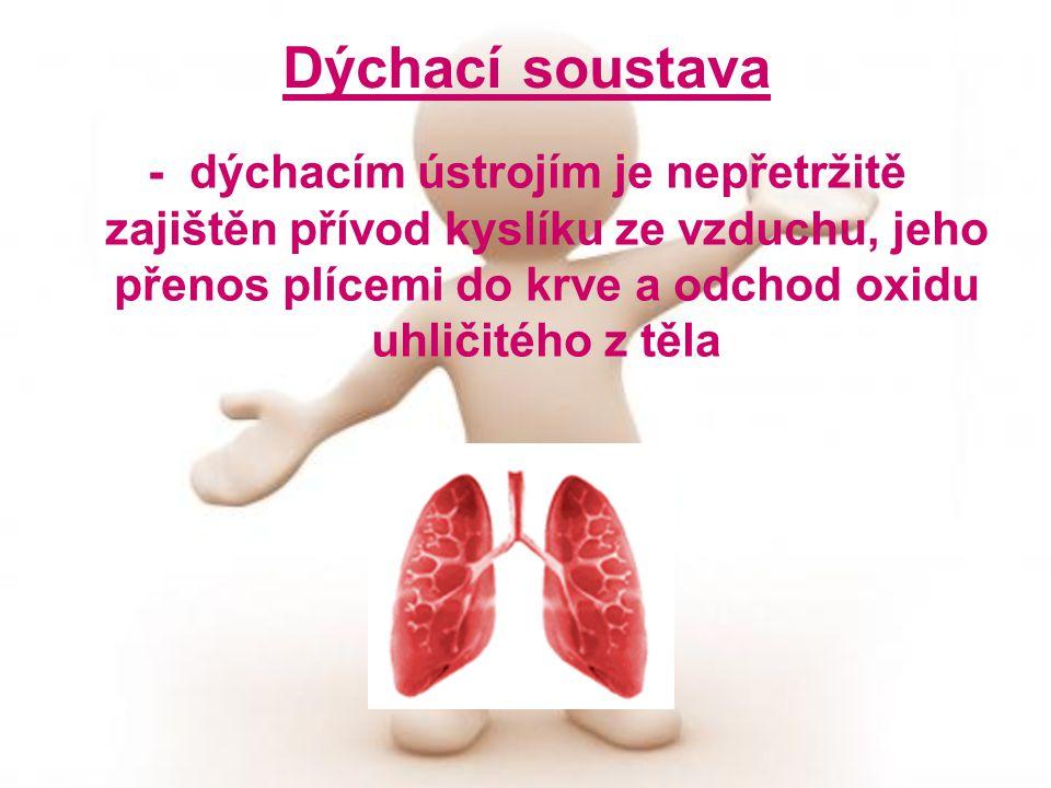 Dýchací soustava - dýchacím ústrojím je nepřetržitě zajištěn přívod kyslíku ze vzduchu, jeho přenos plícemi do krve a odchod oxidu uhličitého z těla