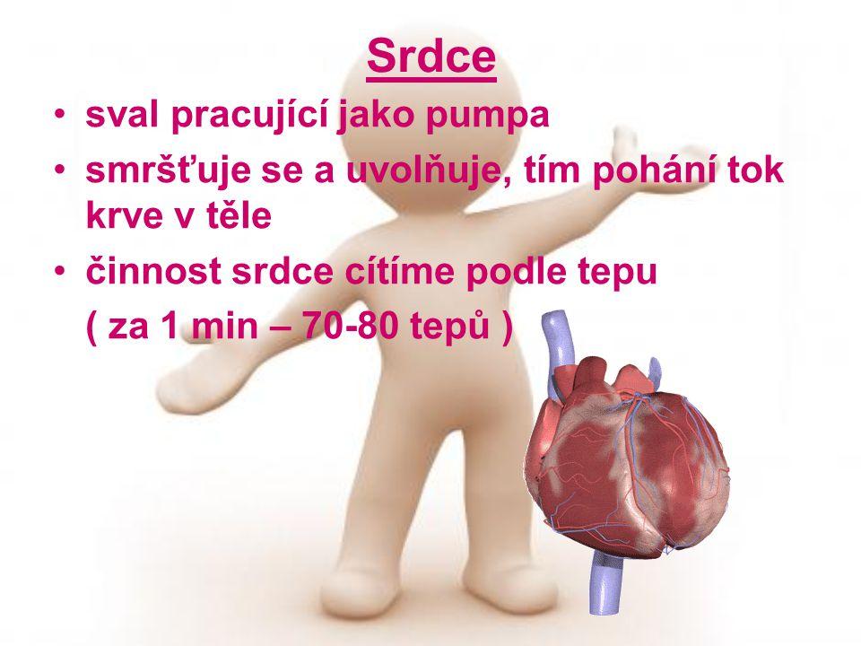 Srdce sval pracující jako pumpa smršťuje se a uvolňuje, tím pohání tok krve v těle činnost srdce cítíme podle tepu ( za 1 min – 70-80 tepů )