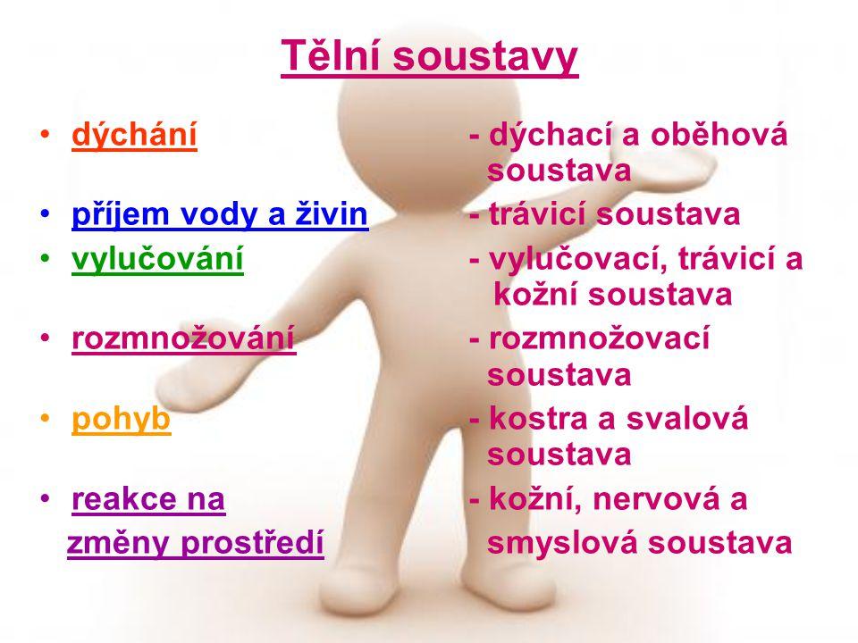 Tělní soustavy dýchání- dýchací a oběhová soustava příjem vody a živin- trávicí soustava vylučování- vylučovací, trávicí a kožní soustava rozmnožování- rozmnožovací soustava pohyb- kostra a svalová soustava reakce na - kožní, nervová a změny prostředí smyslová soustava