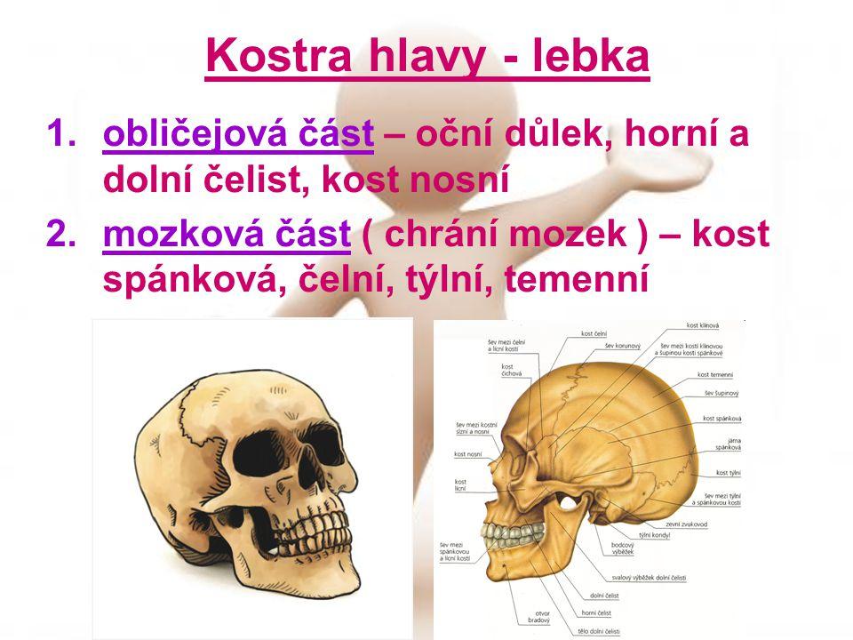 Kostra hlavy - lebka 1.obličejová část – oční důlek, horní a dolní čelist, kost nosní 2.mozková část ( chrání mozek ) – kost spánková, čelní, týlní, temenní