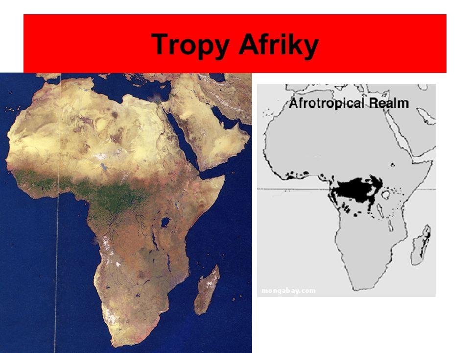 Tropy Afriky