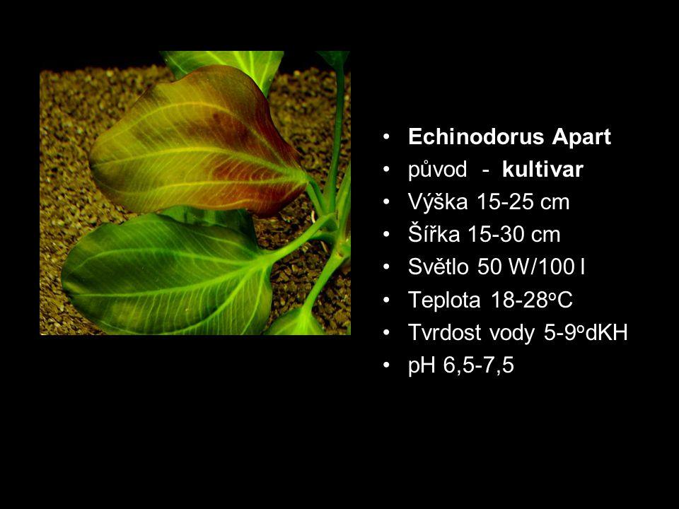 Echinodorus Apart původ - kultivar Výška 15-25 cm Šířka 15-30 cm Světlo 50 W/100 l Teplota 18-28 o C Tvrdost vody 5-9 o dKH pH 6,5-7,5