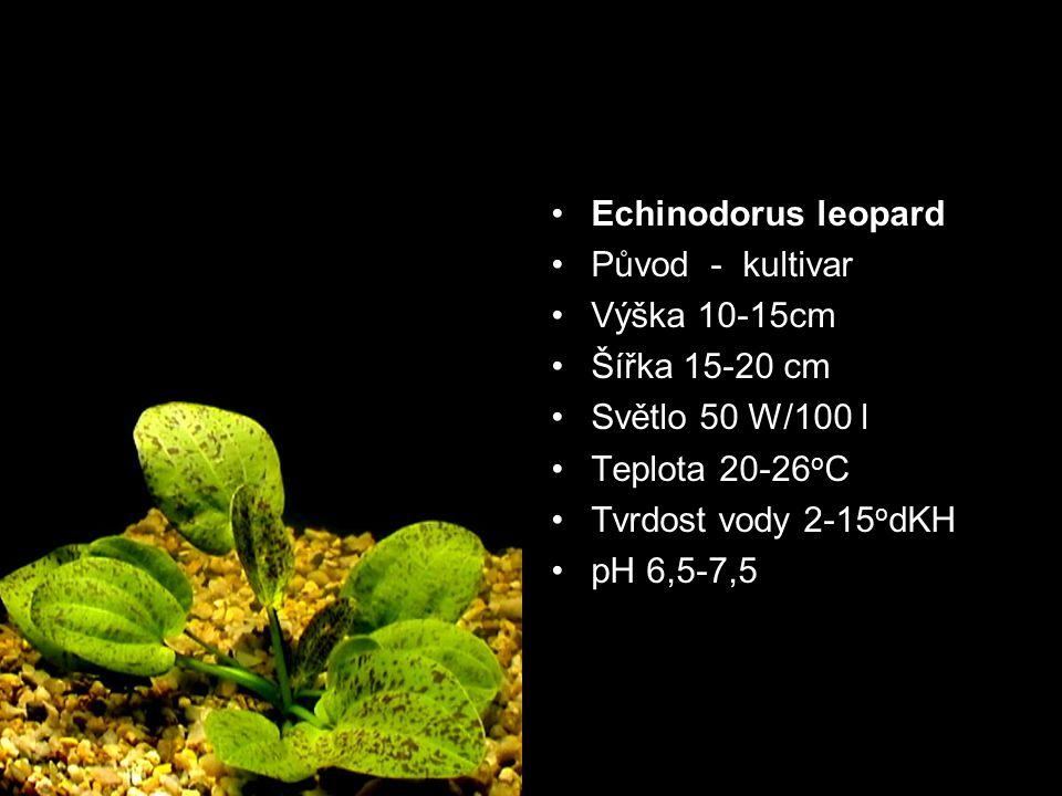 Původ - kultivar Výška 10-15cm Šířka 15-20 cm Světlo 50 W/100 l Teplota 20-26 o C Tvrdost vody 2-15 o dKH pH 6,5-7,5