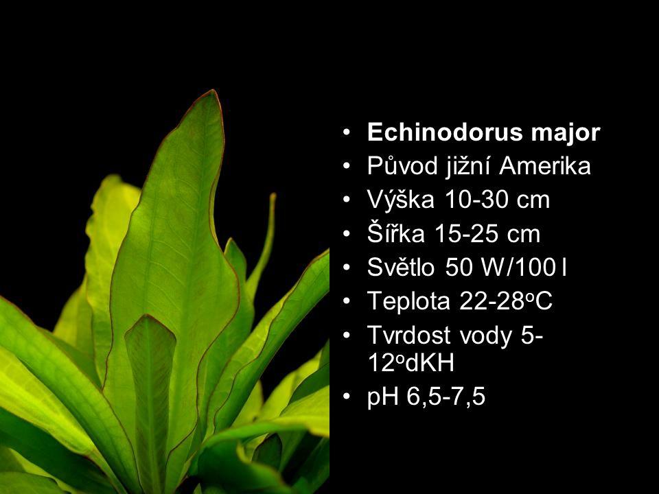 Původ jižní Amerika Výška 10-30 cm Šířka 15-25 cm Světlo 50 W/100 l Teplota 22-28 o C Tvrdost vody 5- 12 o dKH pH 6,5-7,5