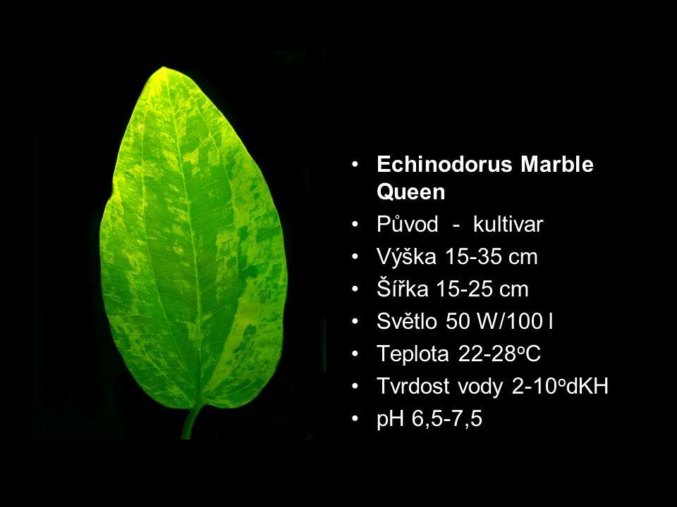 Původ - kultivar Výška 15-35 cm Šířka 15-25 cm Světlo 50 W/100 l Teplota 22-28 o C Tvrdost vody 2-10 o dKH pH 6,5-7,5