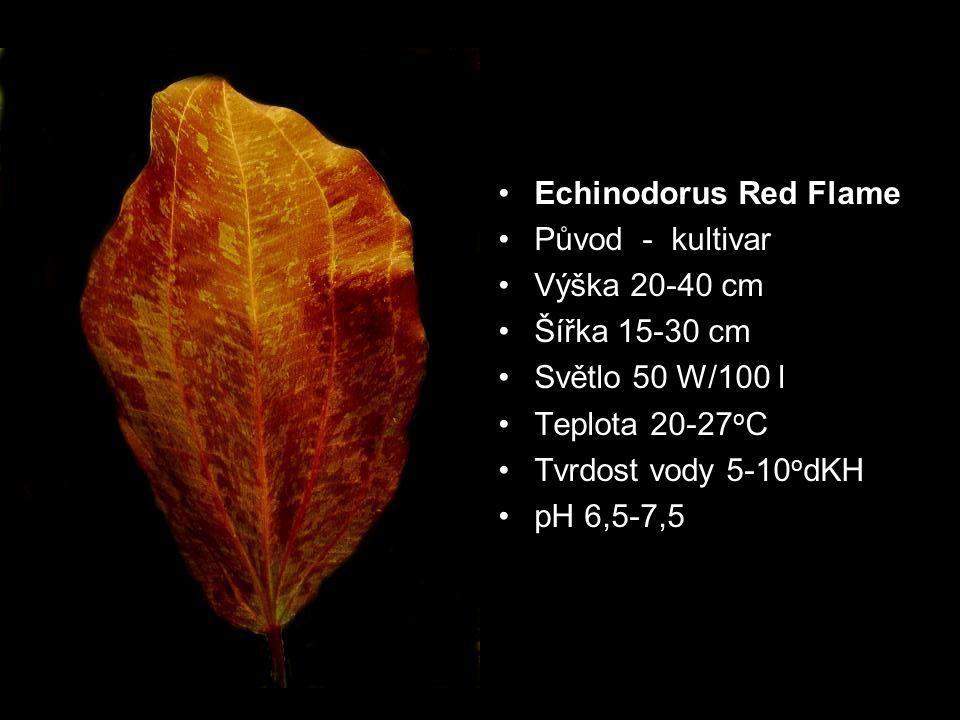 Echinodorus Red Flame Původ - kultivar Výška 20-40 cm Šířka 15-30 cm Světlo 50 W/100 l Teplota 20-27 o C Tvrdost vody 5-10 o dKH pH 6,5-7,5