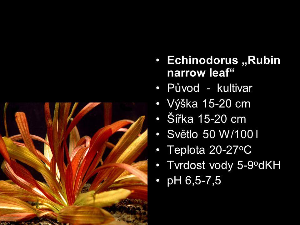 Původ - kultivar Výška 15-20 cm Šířka 15-20 cm Světlo 50 W/100 l Teplota 20-27 o C Tvrdost vody 5-9 o dKH pH 6,5-7,5