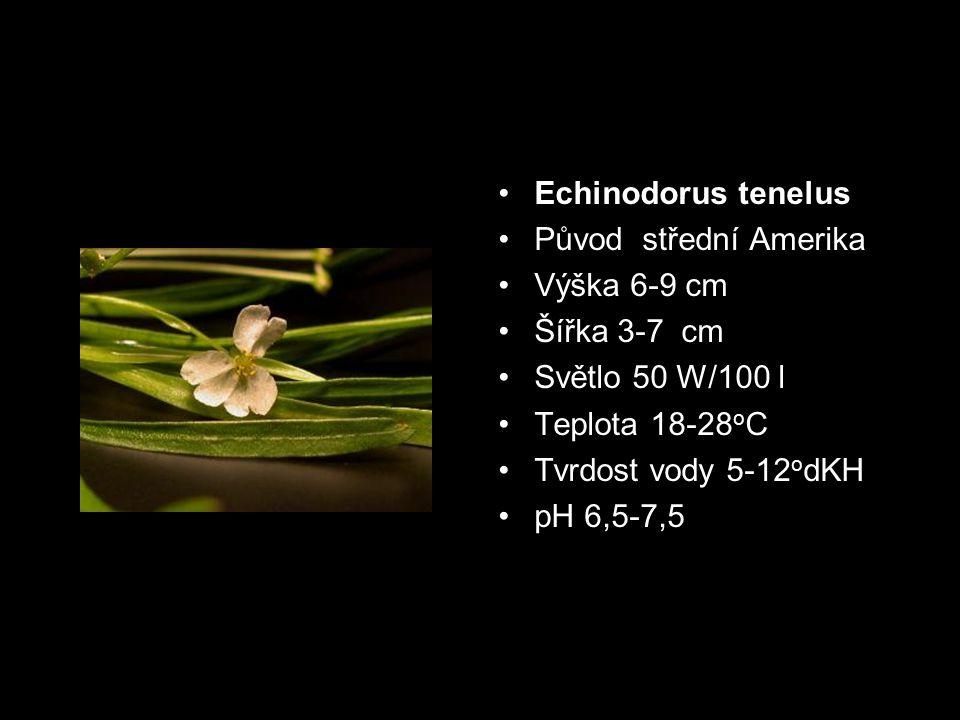 Původ střední Amerika Výška 6-9 cm Šířka 3-7 cm Světlo 50 W/100 l Teplota 18-28 o C Tvrdost vody 5-12 o dKH pH 6,5-7,5