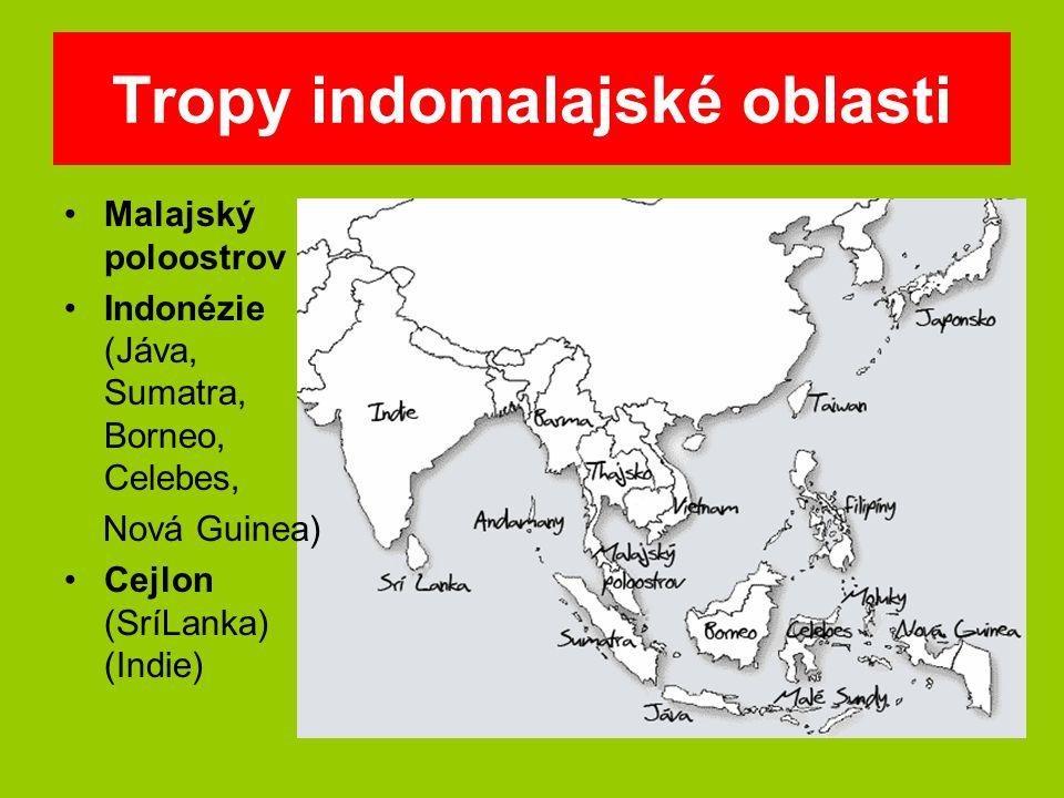 Tropy indomalajské oblasti Malajský poloostrov Indonézie (Jáva, Sumatra, Borneo, Celebes, Nová Guinea) Cejlon (SríLanka) (Indie)