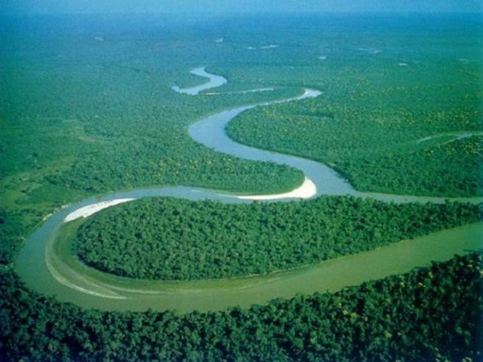 Crypotocoryne griffithi – Malajský poloostrov; pomalu tekoucí vody, humusovitý substrát; roste často společně s Barclaya motleyi Crypotocoryne huduroi – Borneo (Kalimantan); roste submersně v rychle tekoucích měkkých vodách Crypotocoryne keei – Borneo (Saravak – jen jedna známá lokalita); menší potok s rychle proudící vodou, štěrkovito-písčité dno, pH okolo neutrálu (na Borneo nezvykle vysoké), tvrdší voda Crypotocoryne minima – Malajský poloostrov; v pomalu tekoucích vodách, také na březích nebo v pralesních tůních, substrát písčito-bahnitý Crypotocoryne moehlmannii – Z Sumatra; pomalu tekoucí vody v lesích, které při nízkém stavu vody ovlivňuje příliv a odliv Crypotocoryne parva – Srí Lanka; roste obojživelně na březích rychle tekoucích vod s dosatkem světla, substrát jílovitý, voda mírně kyselá a velmi měkká Crypotocoryne pontederiifolia – Sumatra (provincie Padang); roste obojživelně v dosahu přílivu a odlivu (sladká voda); podobné stanoviště jako C.
