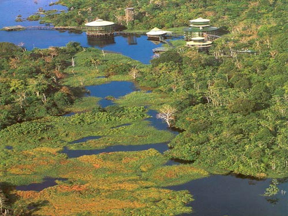 Amazonský deštný les Zelené plíce planety Celé povodí Amazonky se rozkládá na 7,5 mil.
