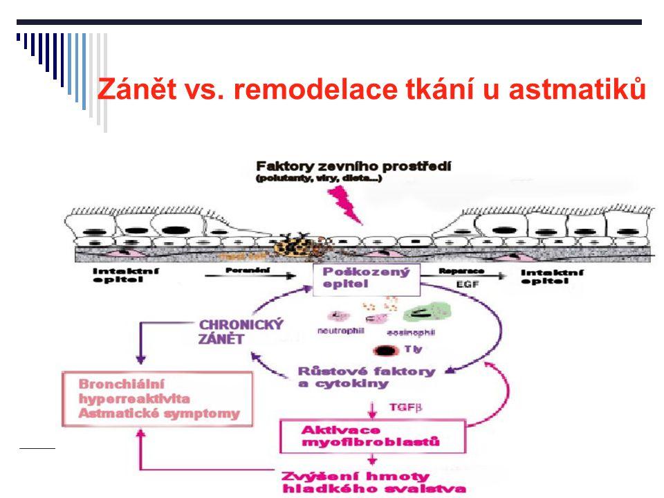 Zánět vs. remodelace tkání u astmatiků