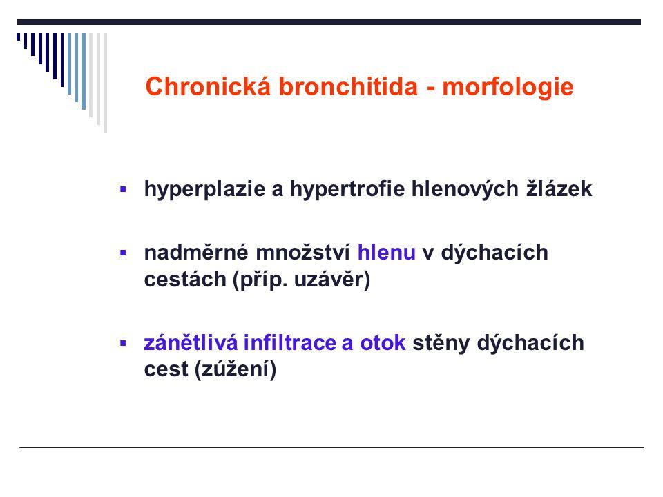 Chronická bronchitida - morfologie  hyperplazie a hypertrofie hlenových žlázek  nadměrné množství hlenu v dýchacích cestách (příp. uzávěr)  zánětli