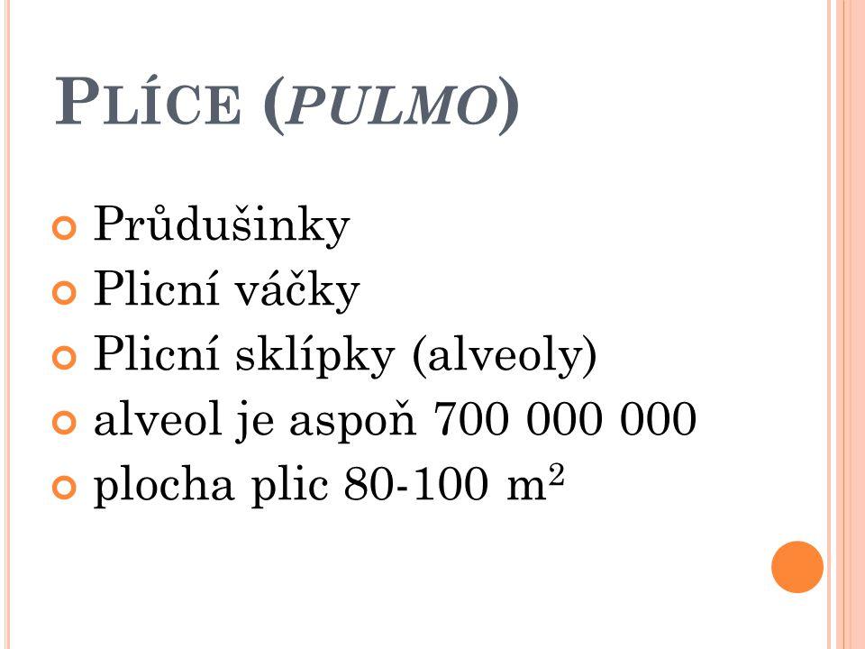 P LÍCE ( PULMO )