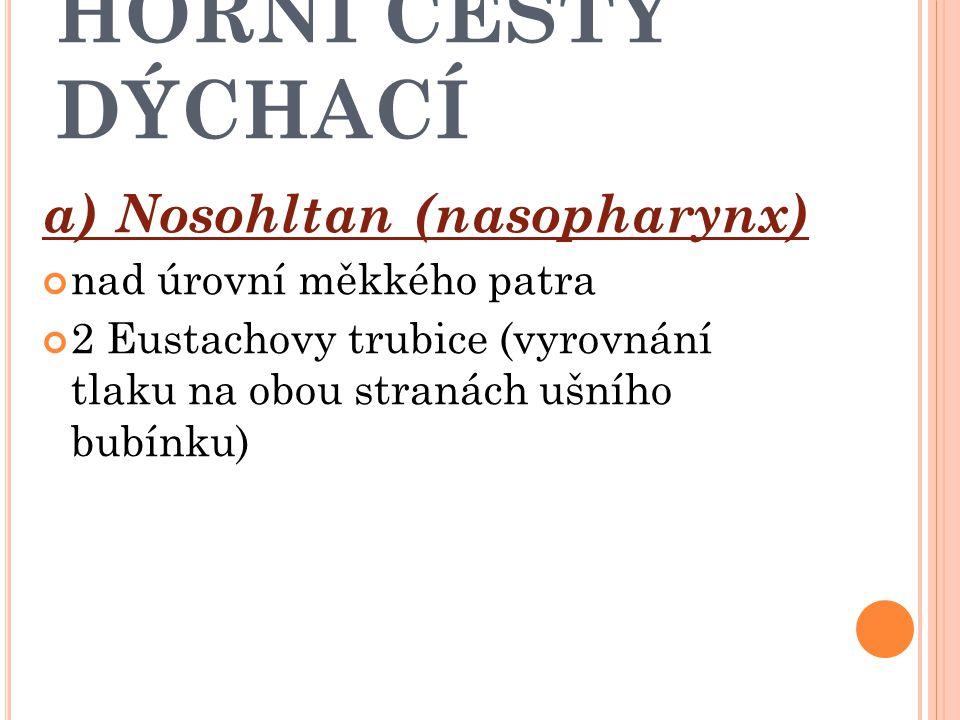 HORNÍ CESTY DÝCHACÍ Hltan (pharynx) a) Nosohltan b) Ústní část hltanu c) Hrtanová část hltanu