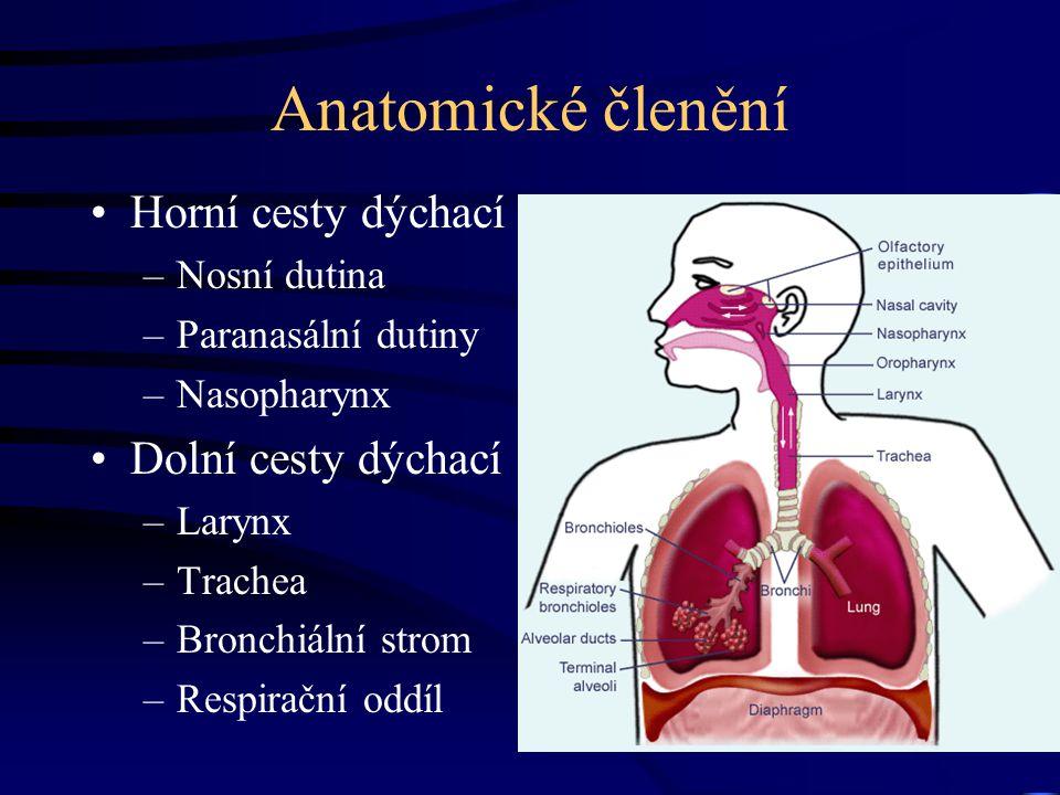 Anatomické členění Horní cesty dýchací –Nosní dutina –Paranasální dutiny –Nasopharynx Dolní cesty dýchací –Larynx –Trachea –Bronchiální strom –Respirační oddíl