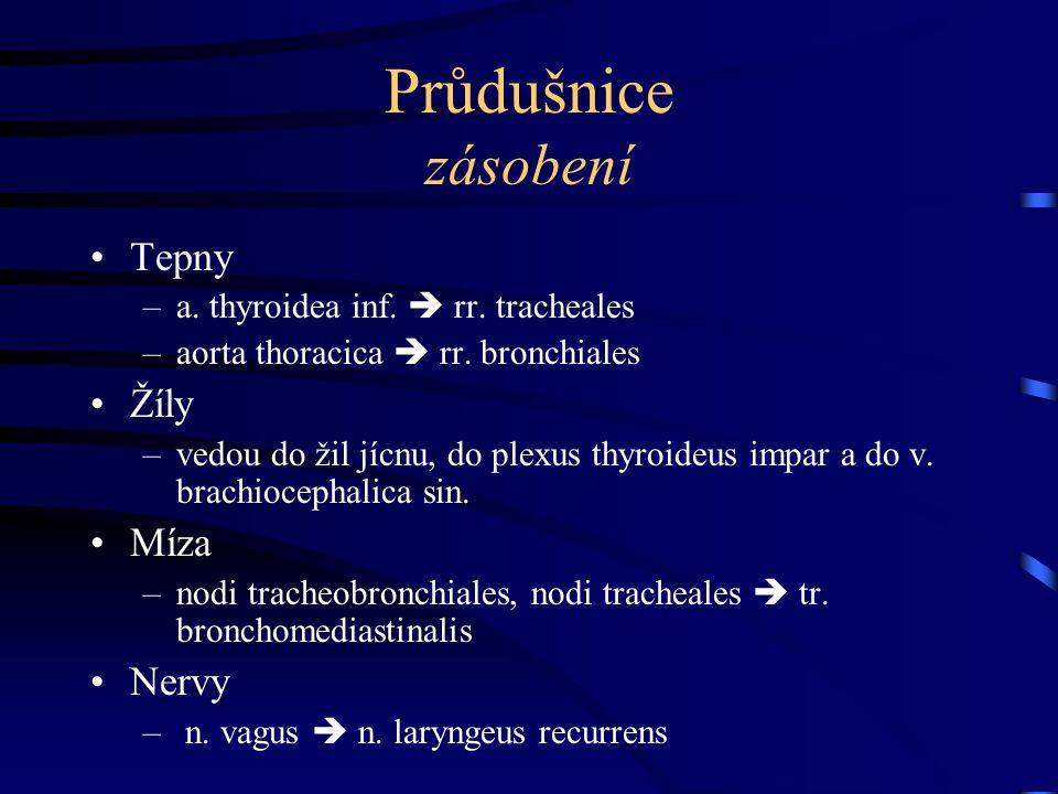 Průdušnice zásobení Tepny –a. thyroidea inf.  rr. tracheales –aorta thoracica  rr. bronchiales Žíly –vedou do žil jícnu, do plexus thyroideus impar