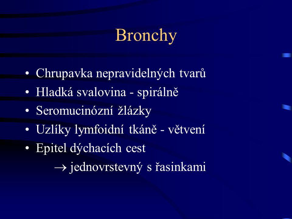 Bronchioly Epitel postupně kubický jednovrstevný Clarovy buňky Není chrupavka, žlázy ani lymfatické uzlíky Velké množství elastických vláken Terminální bronchioly - plicní lalůček