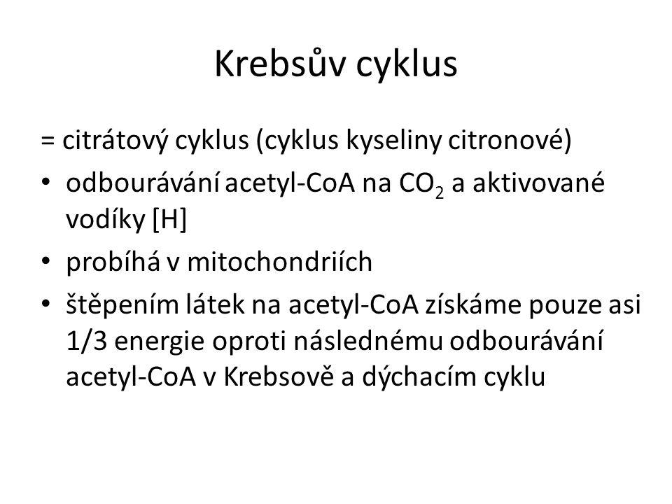 Krebsův cyklus = citrátový cyklus (cyklus kyseliny citronové) odbourávání acetyl-CoA na CO 2 a aktivované vodíky [H] probíhá v mitochondriích štěpením látek na acetyl-CoA získáme pouze asi 1/3 energie oproti následnému odbourávání acetyl-CoA v Krebsově a dýchacím cyklu