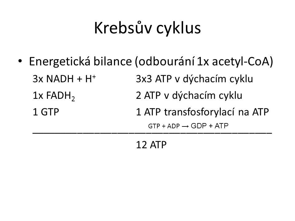Krebsův cyklus Energetická bilance (odbourání 1x acetyl-CoA) 3x NADH + H + 3x3 ATP v dýchacím cyklu 1x FADH 2 2 ATP v dýchacím cyklu 1 GTP1 ATP transfosforylací na ATP __________________________________________ 12 ATP GTP + ADP → GDP + ATP