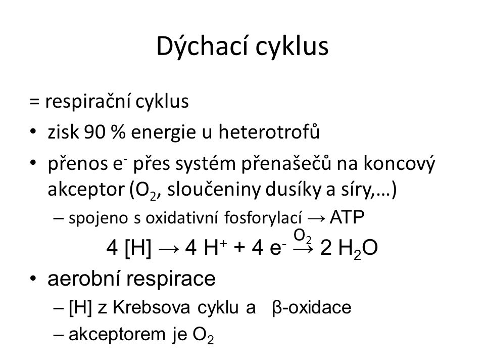 Dýchací cyklus = respirační cyklus zisk 90 % energie u heterotrofů přenos e - přes systém přenašečů na koncový akceptor (O 2, sloučeniny dusíky a síry,…) – spojeno s oxidativní fosforylací → ATP 4 [H] → 4 H + + 4 e - → 2 H 2 O aerobní respirace –[H] z Krebsova cyklu a β-oxidace –akceptorem je O 2 O2O2