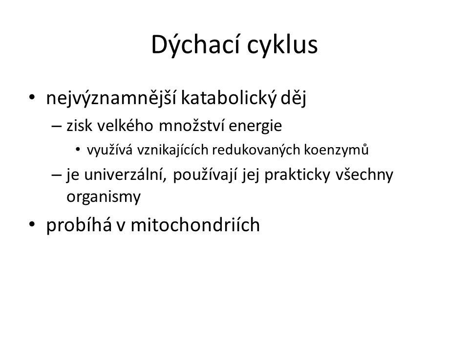 Dýchací cyklus