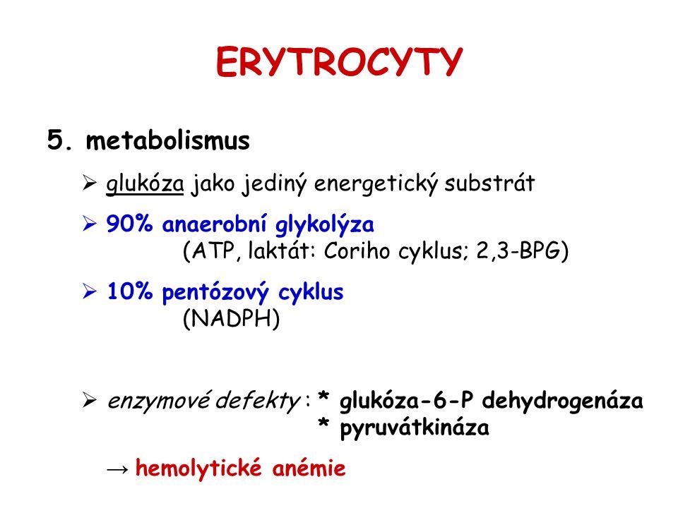 ERYTROCYTY 5. metabolismus  glukóza jako jediný energetický substrát  90% anaerobní glykolýza (ATP, laktát: Coriho cyklus; 2,3-BPG)  10% pentózový