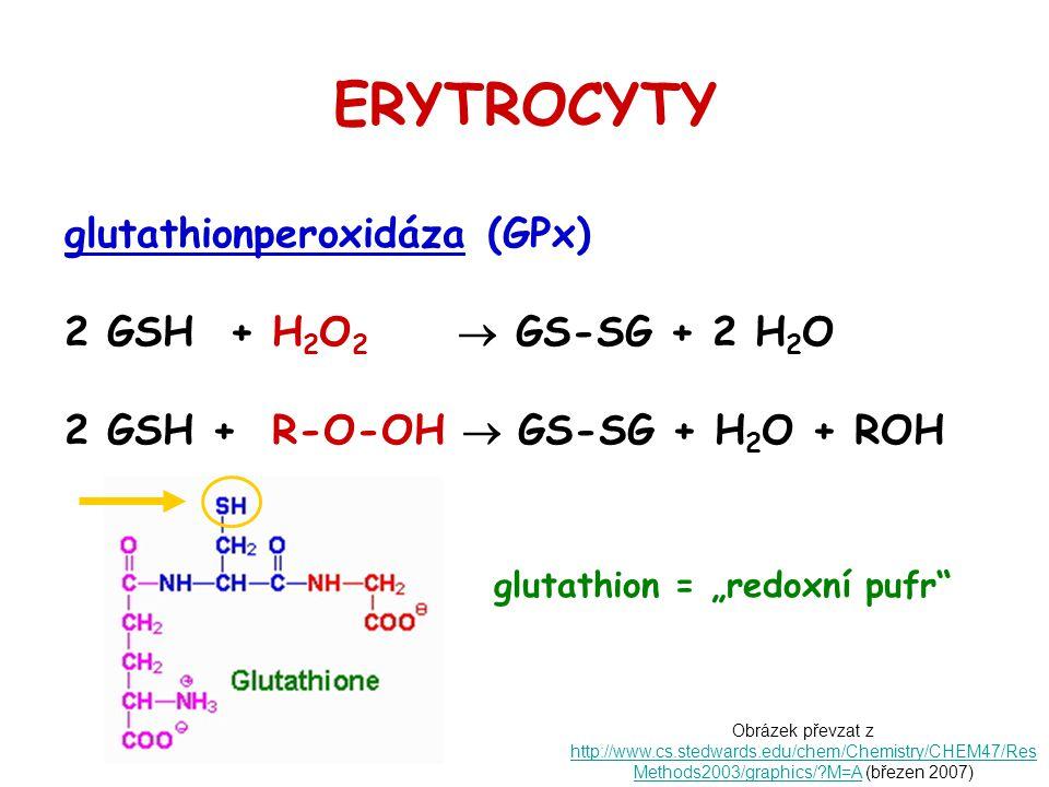 ERYTROCYTY glutathionperoxidáza (GPx) 2 GSH + H 2 O 2  GS-SG + 2 H 2 O 2 GSH + R-O-OH  GS-SG + H 2 O + ROH Obrázek převzat z http://www.cs.stedwards